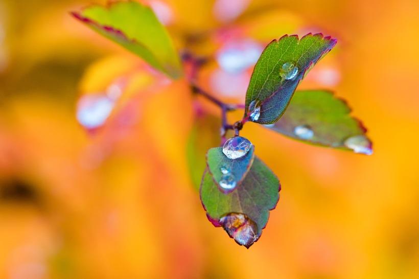 leaves-1804646_1920.jpg